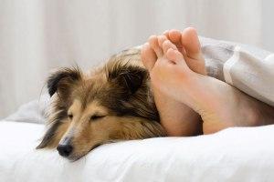 Dormir-perros-cama