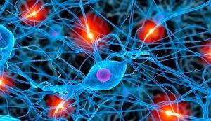 celulas-cerebrales