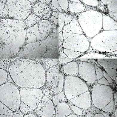 regenerative.gelx1200