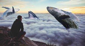 homem-olhando-céu-cheio-de-baleias-1024x554-1024x554