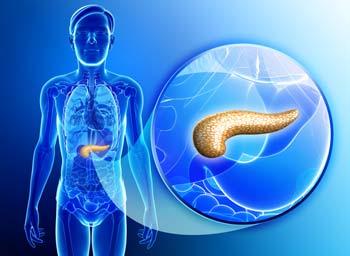 pancreas-diagram