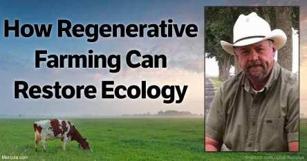 how-regenerative-farming-can-restore-ecology-fb