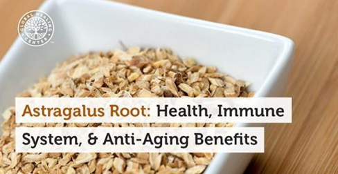 Astragalus Root – Health, Immune System and Anti-Aging