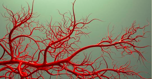 Fasting-induced anti-aging molecule keeps blood vessels young |